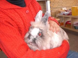 Projektwoche Kaninchen 019
